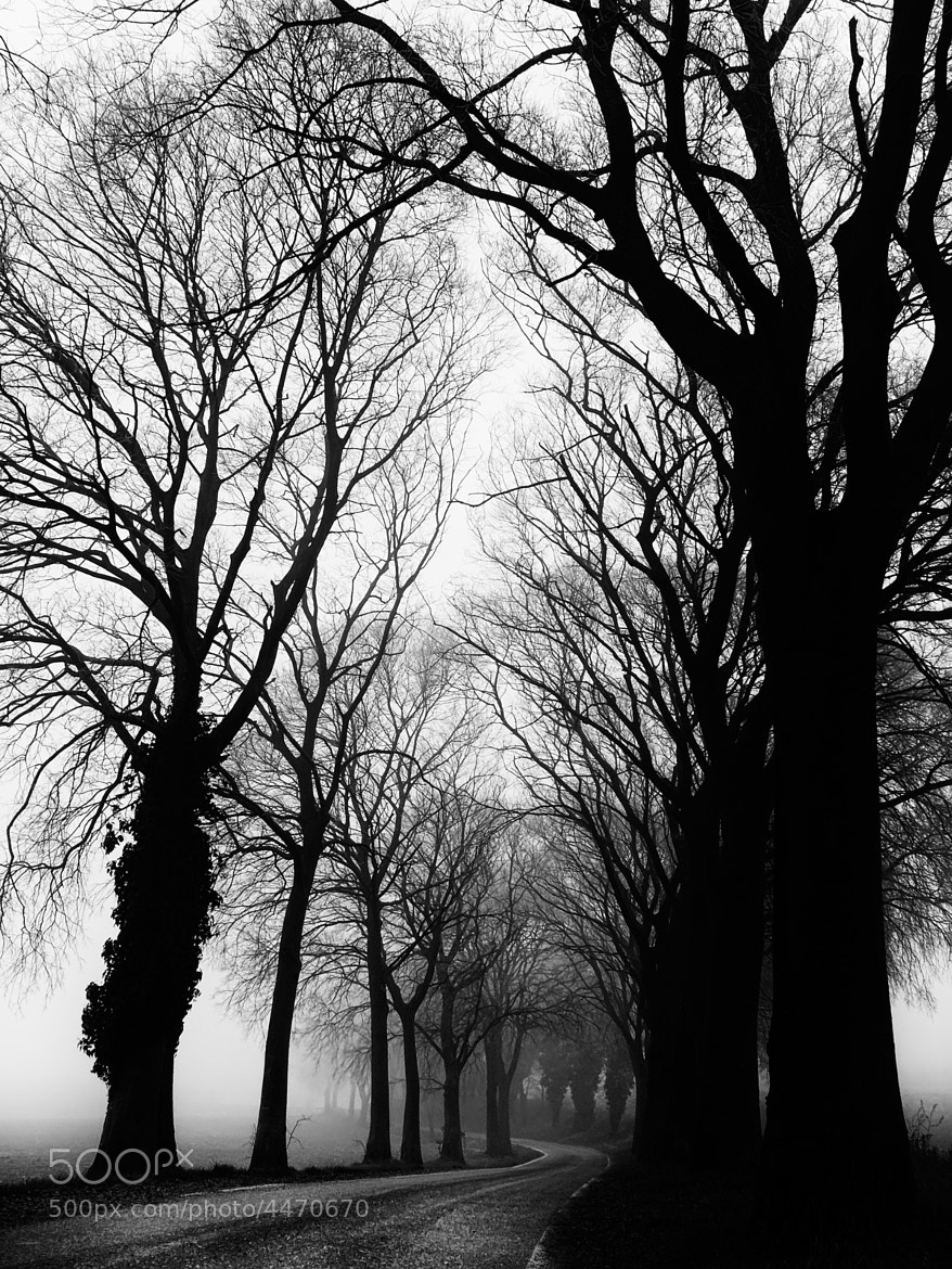 Photograph Foggy by Andrea Gusperti on 500px