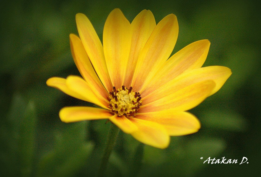 Photograph Yellow by Atakan Divitlioğlu on 500px