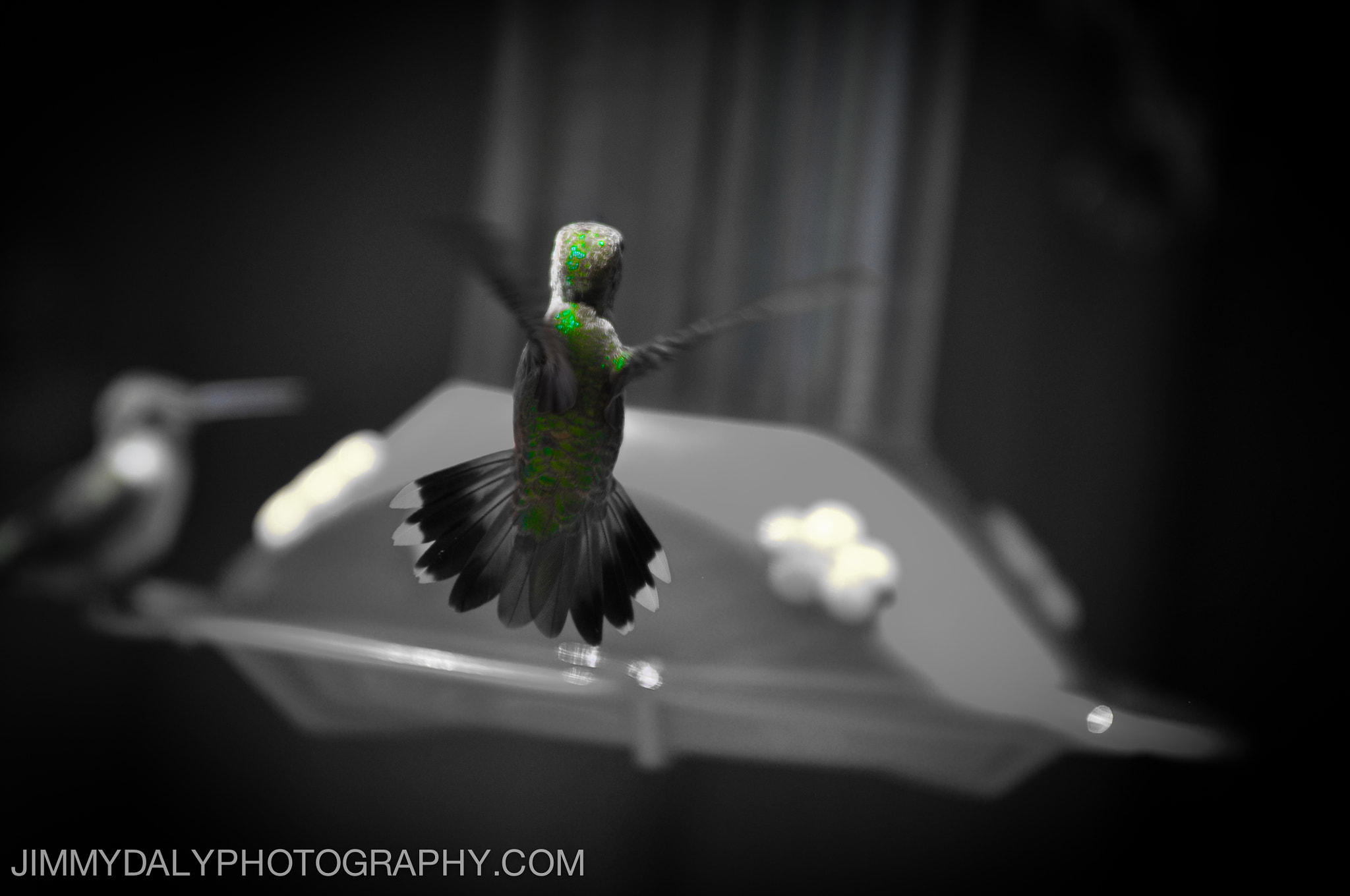 Photograph Hummingbird in flight by Jimmy Daly on 500px