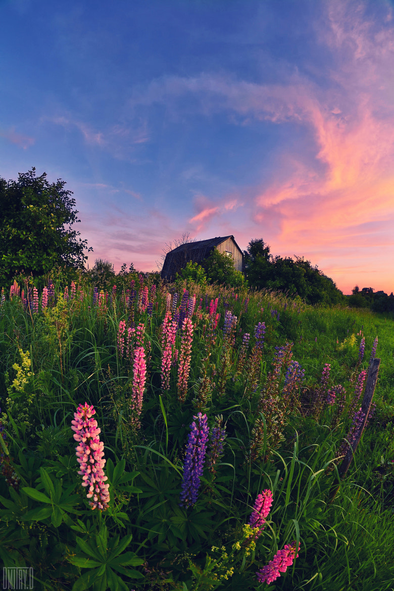 Photograph Summer - time colors by Dmitry Doronin on 500px