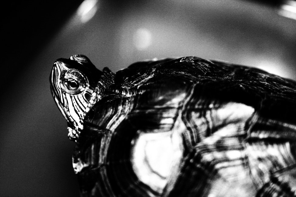 Photograph OLD TURTLE by Foad Shamsi on 500px