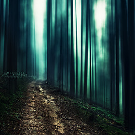 Dark world by Bastien HAJDUK (Troudd)) on 500px.com