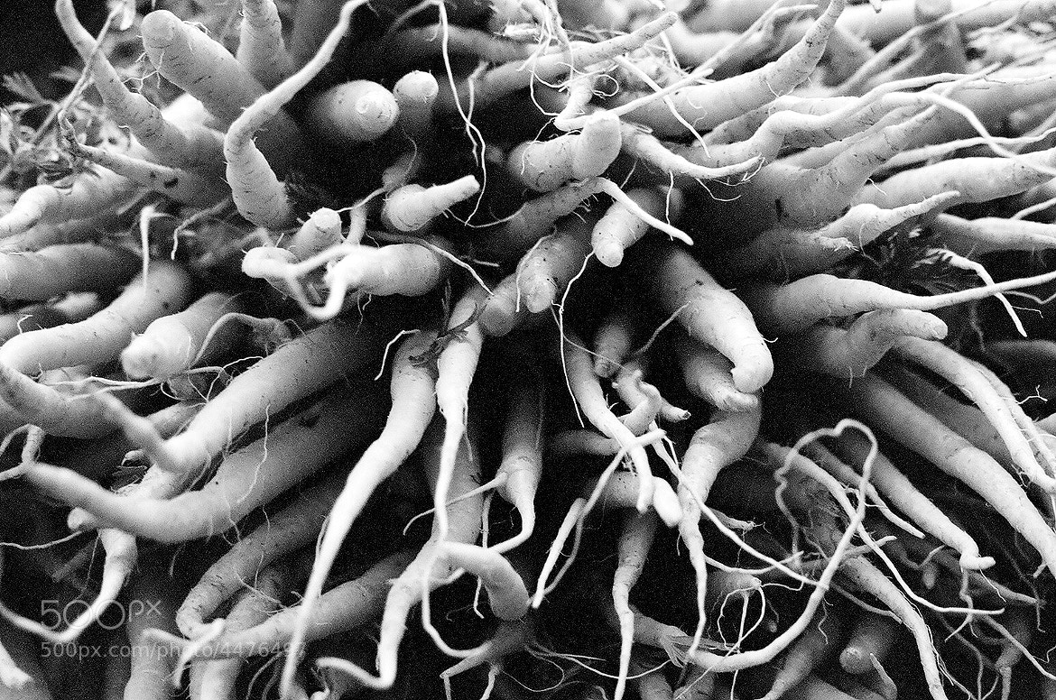 Photograph NYC carrots by Leo Barus on 500px