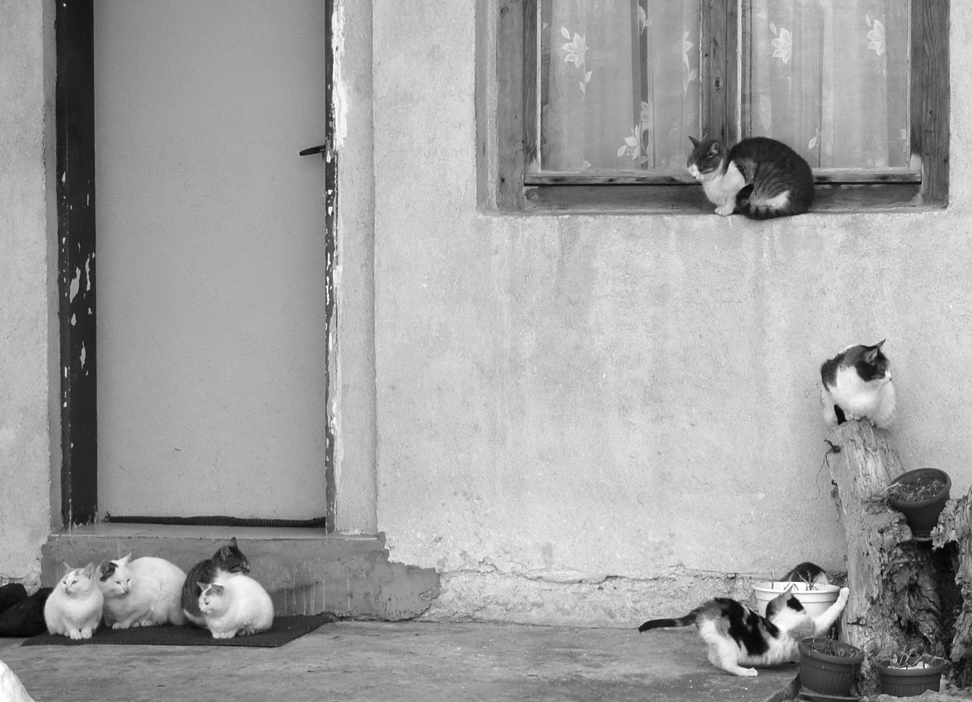 Photograph Cats by Martin Zeinelov on 500px
