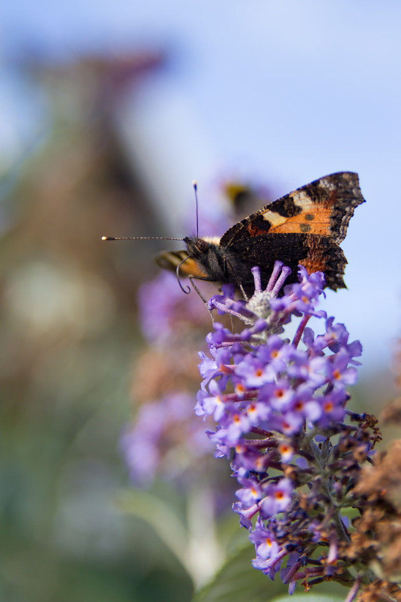 Photograph Tortoiseshell by Marc Guille on 500px