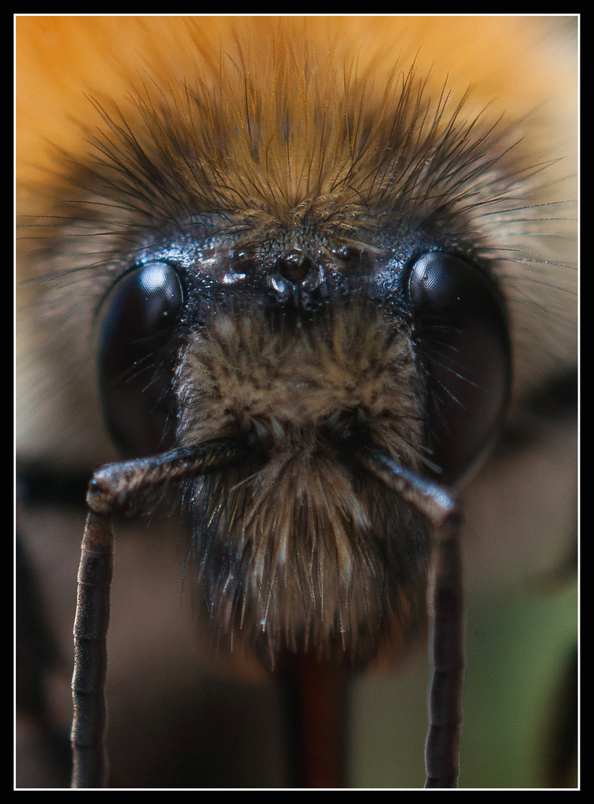 Photograph Bee by Jonny Andrews on 500px