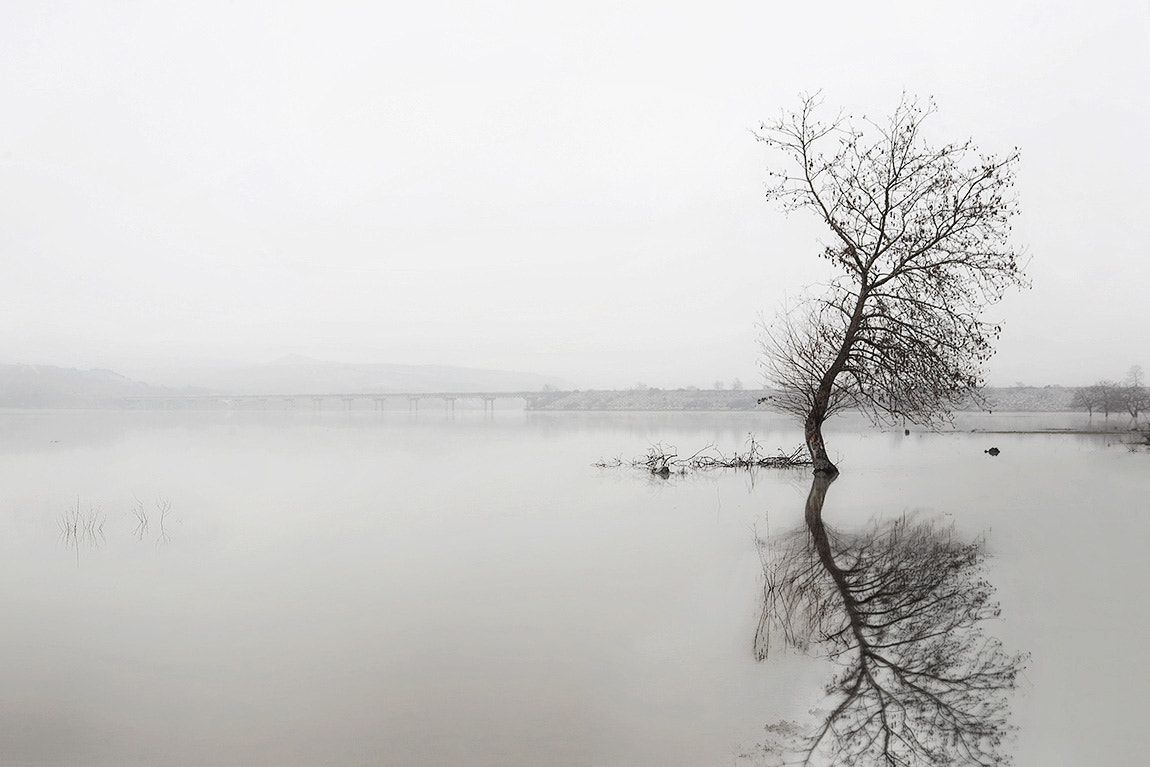 Photograph Sparse fog by Christos Lamprianidis on 500px