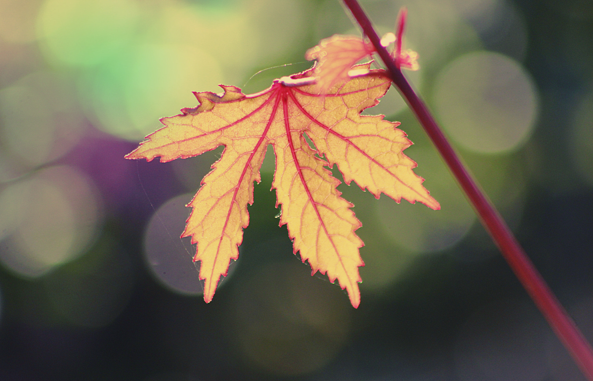 Photograph last leaf by Mistery Lady on 500px