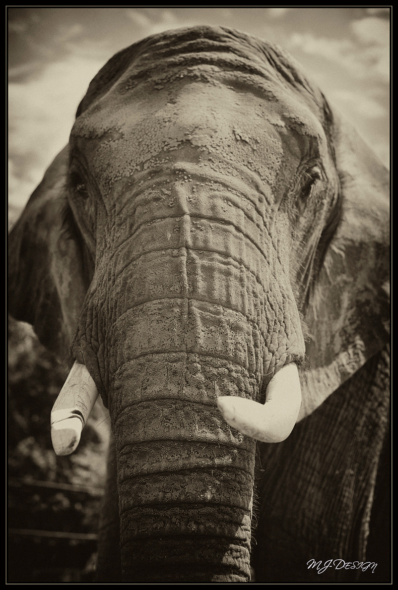 Photograph The Big Bull by MJ Design on 500px