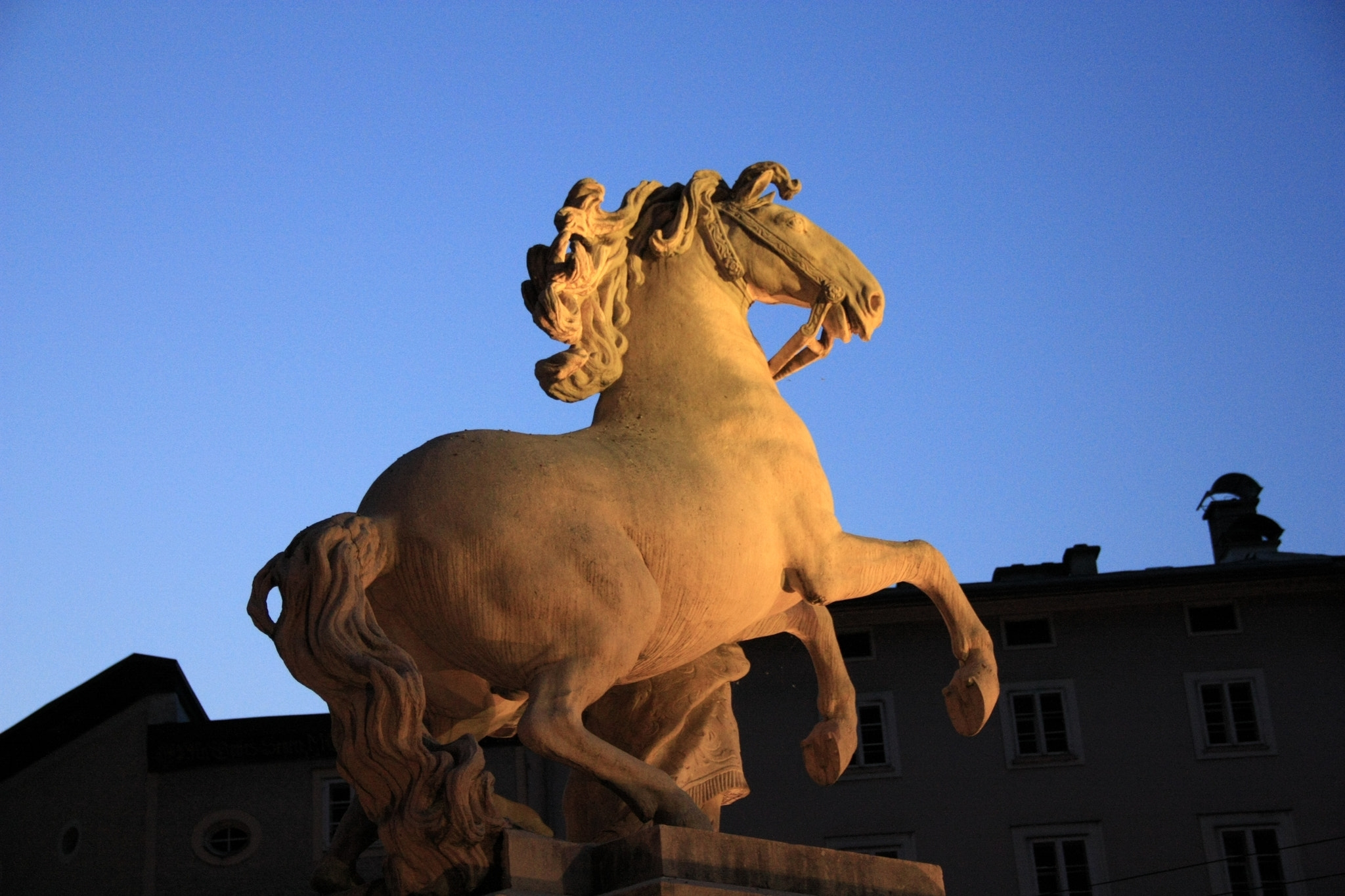 Photograph Horse by Rubens Hardt on 500px