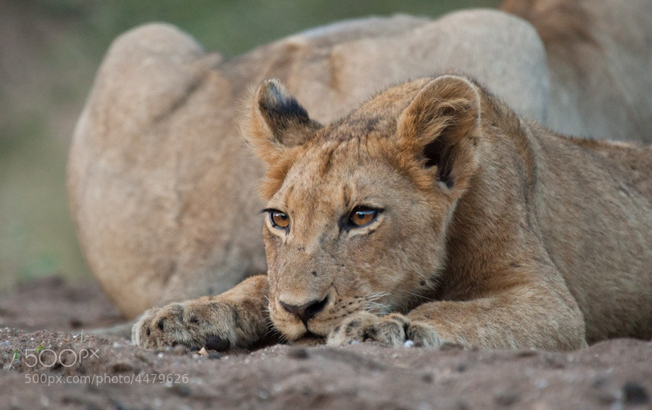 Photograph I can see you... by Marlon du Toit on 500px