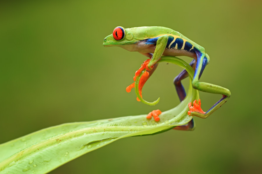 Photograph acrobat by shikhei goh on 500px