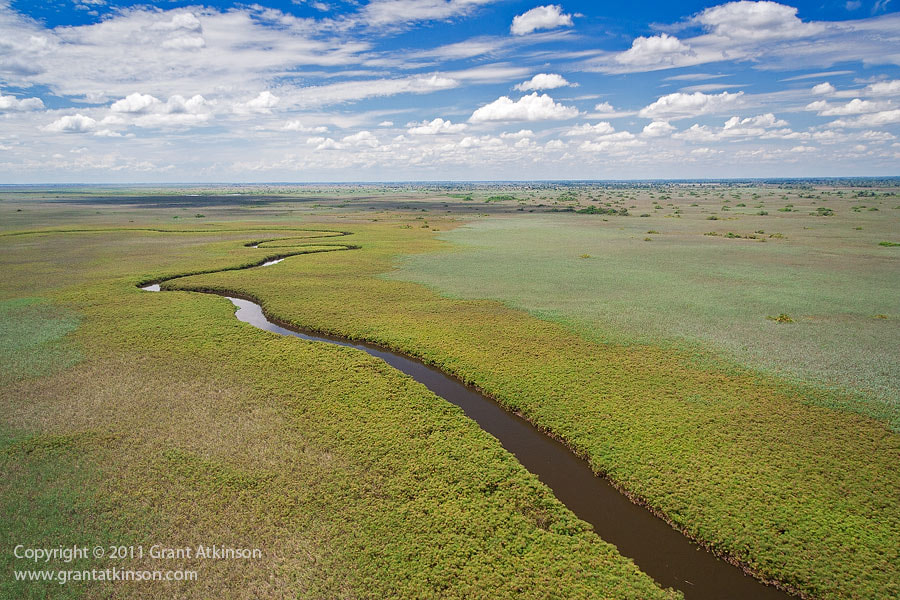 Photograph Summer in the Okavango Delta by Grant Atkinson on 500px