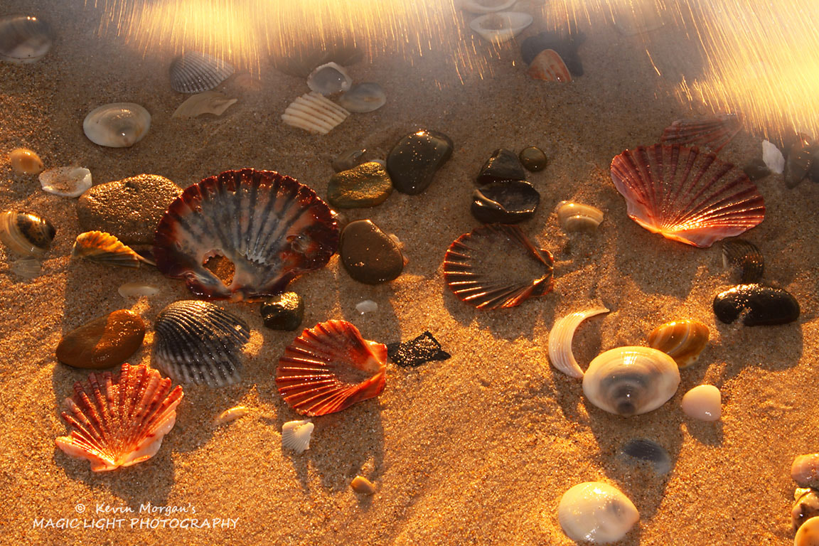 Photograph Shells on the Seashore by Kevin Morgan on 500px