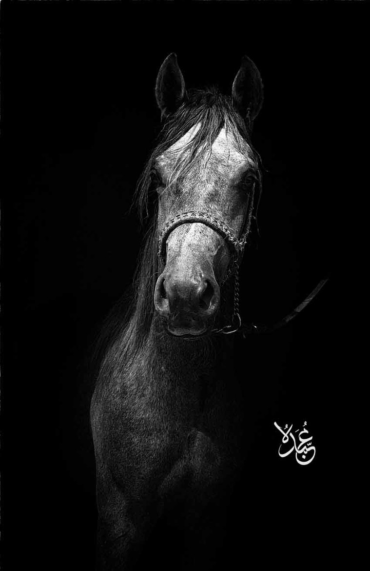 Photograph Black Beauty by Mohamed  Abdo on 500px