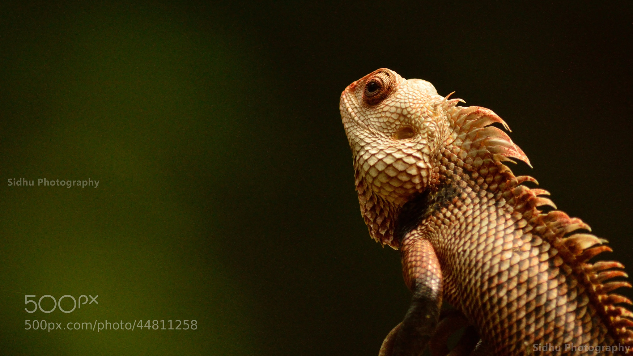 Photograph Sharp Look by Arun Siddharth on 500px