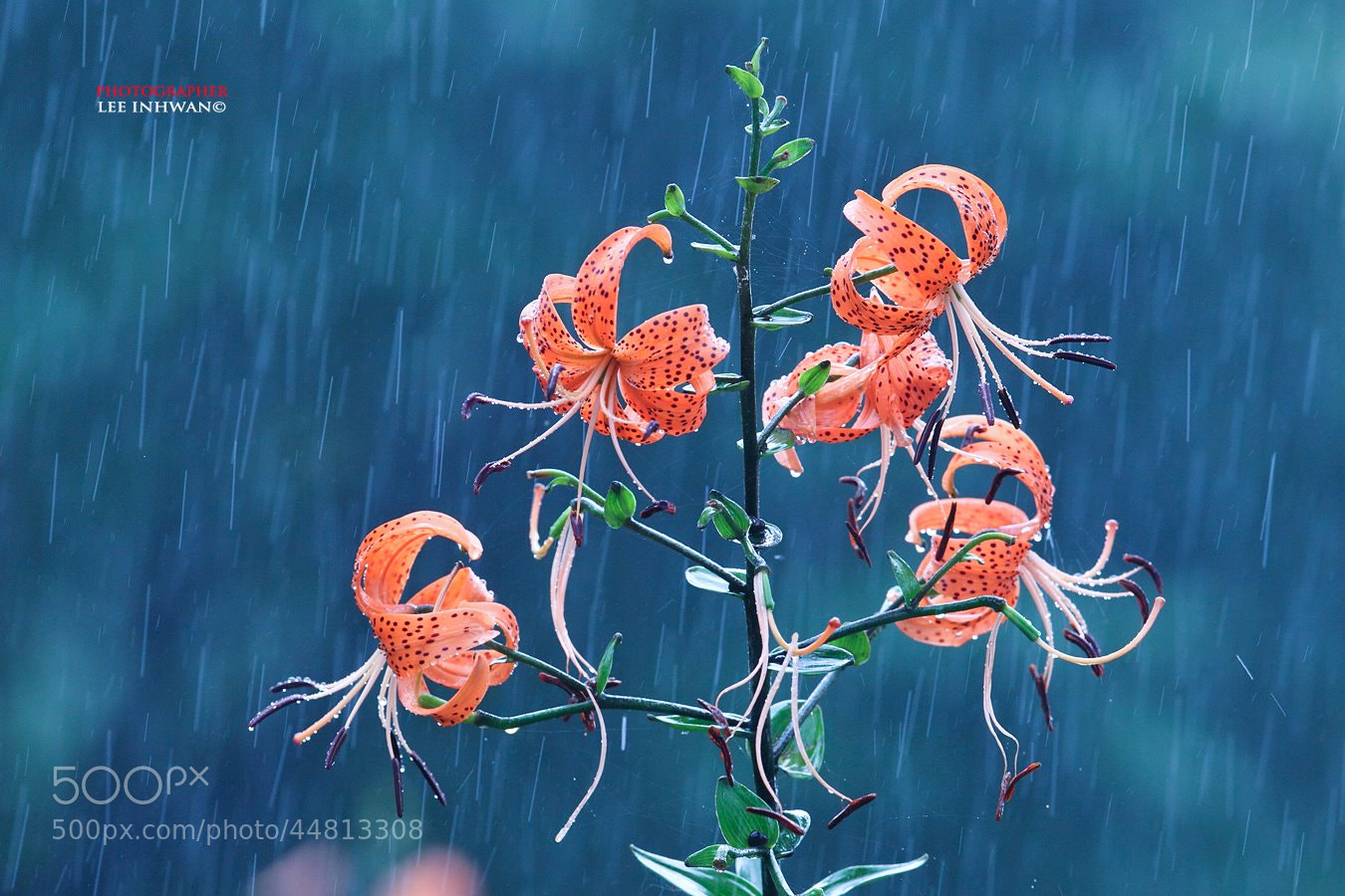 Photograph A heavy rainy day by LEE INHWAN on 500px