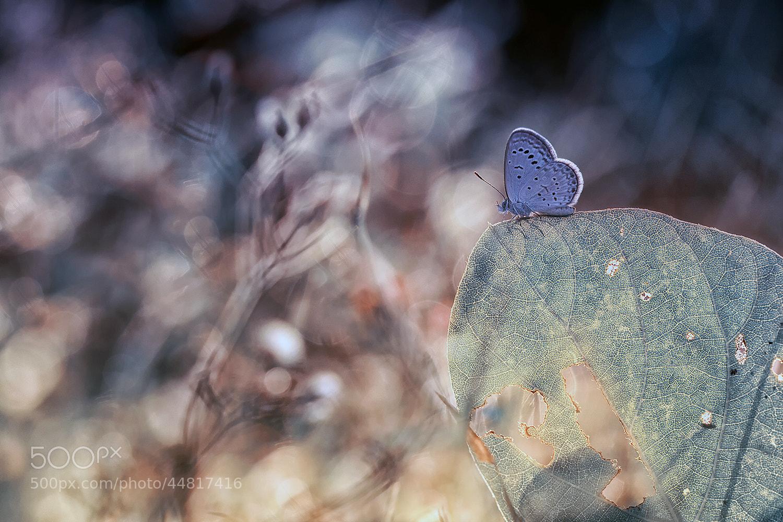 Photograph Untitled by Heri Wijaya on 500px