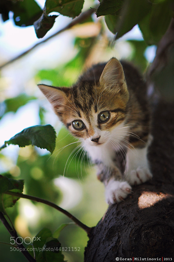 Photograph Hunter by Zoran Milutinovic on 500px
