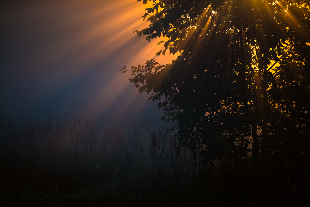 Photograph morning glory by Stephan Amm on 500px