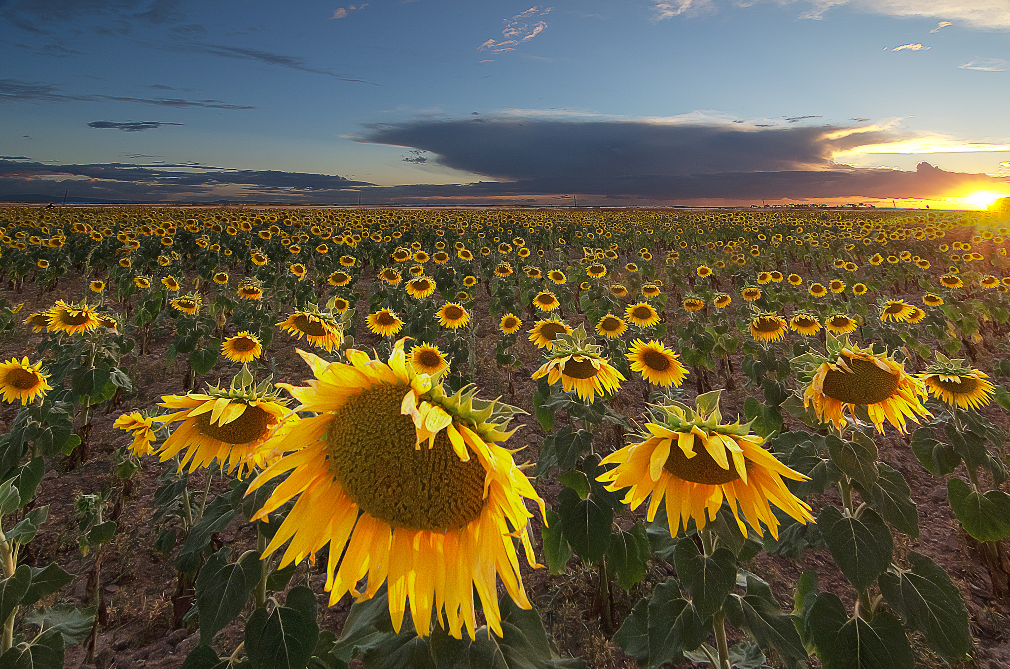 Photograph Campo de girasoles by Eduardo Menendez on 500px