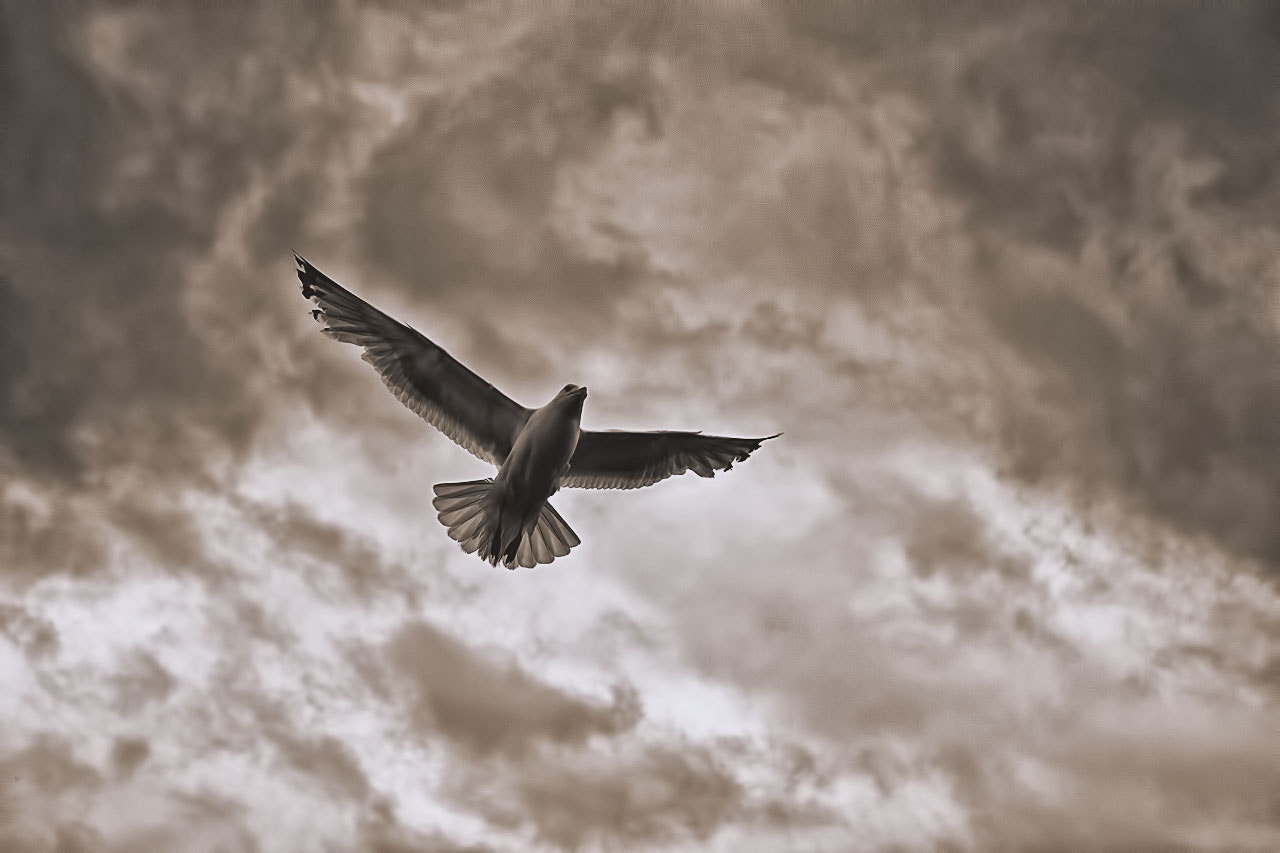 Photograph Seagull by Marco Hofmann on 500px
