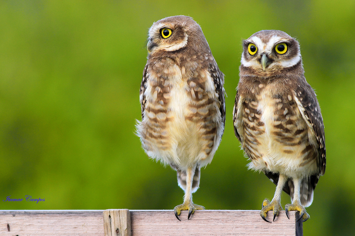 Photograph Three eyes and three feet! by Itamar Campos on 500px