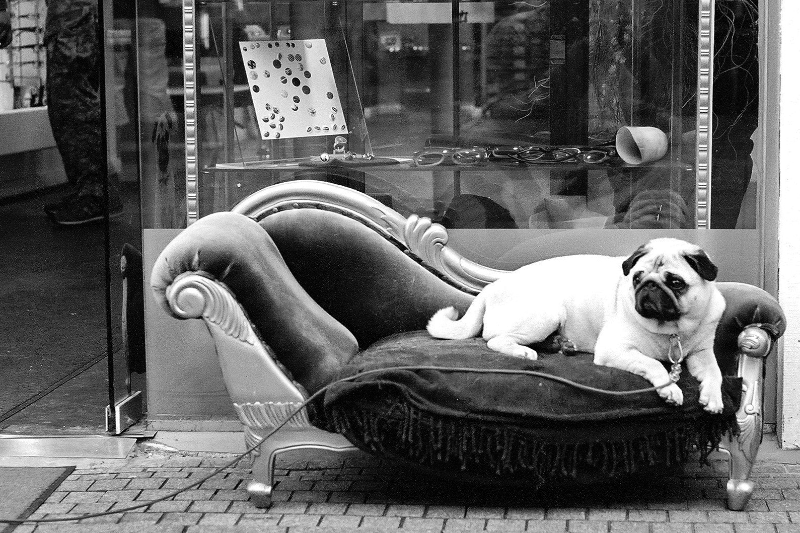 Photograph Pug by Max Sammet on 500px