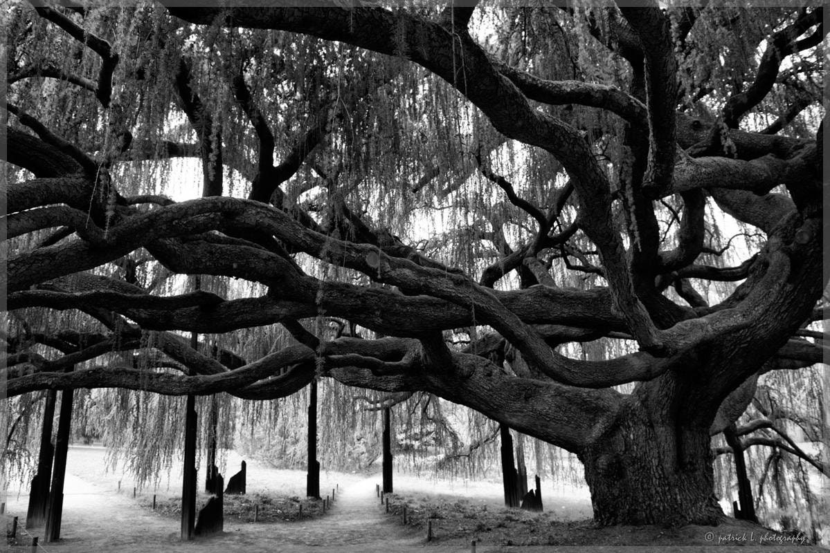 Photograph Old tree by patrick L. on 500px
