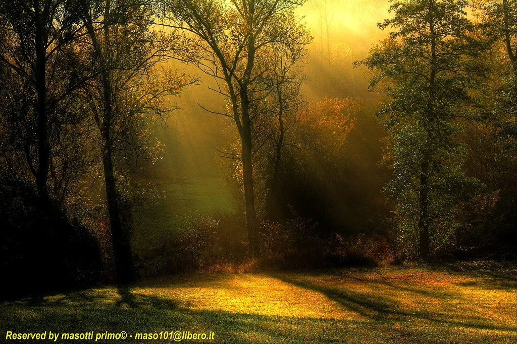 Photograph if the light does not come to you, you have to start looking for the light  by primo masotti on 500px