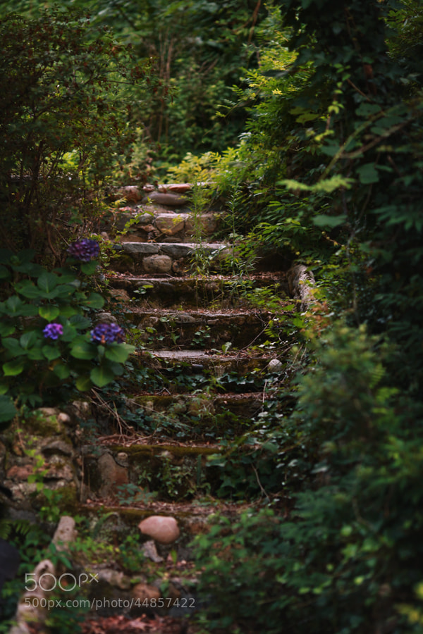 Photograph Overgrown stairs by Bree Crudo on 500px
