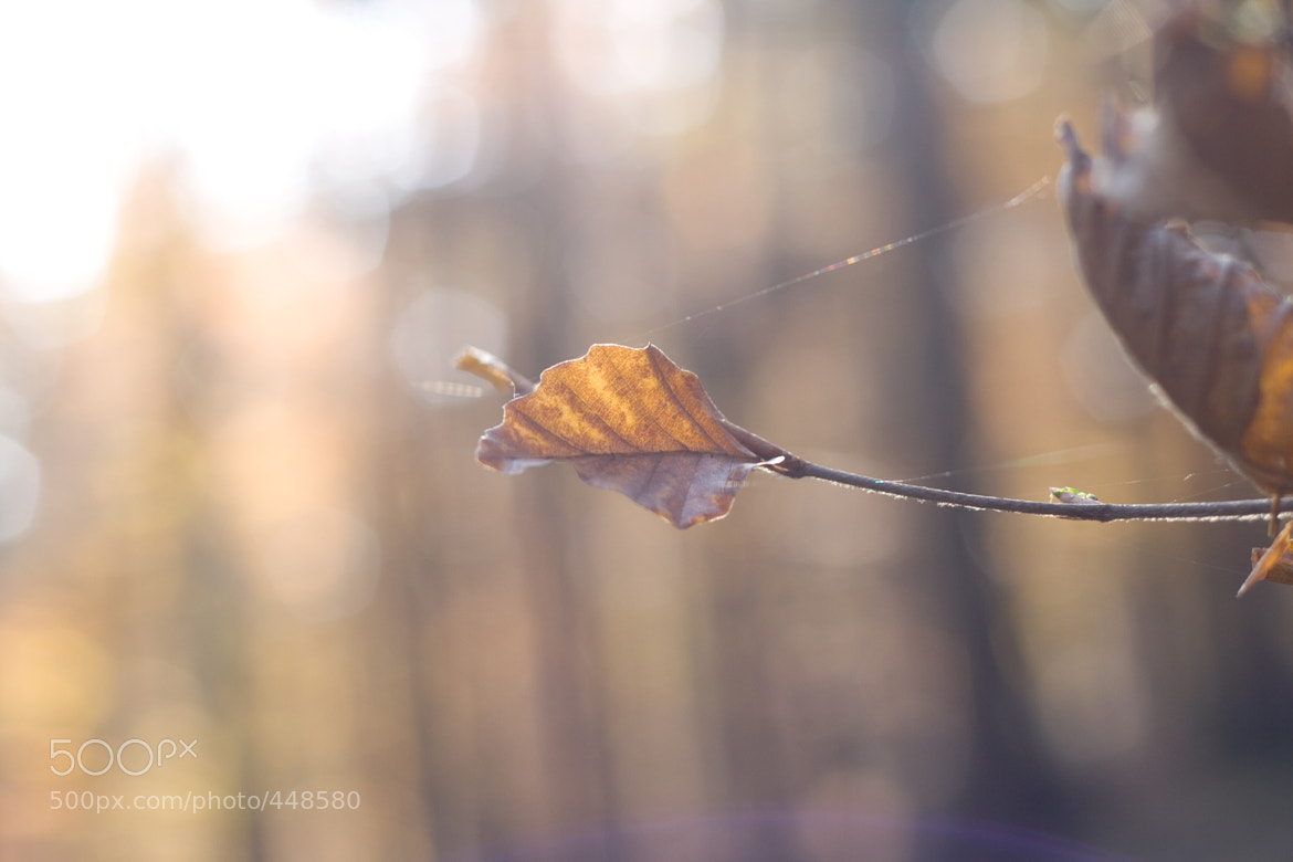 Photograph lost in the wind by Sebastian ¿? on 500px