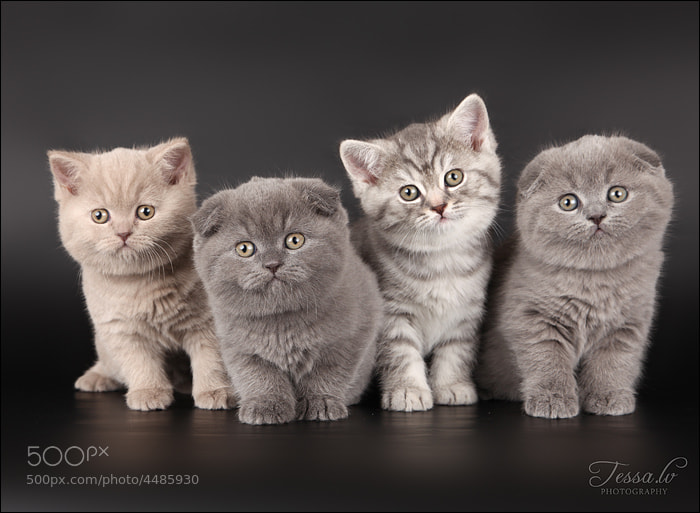 Four Little Kittens by Ludmila Pankova