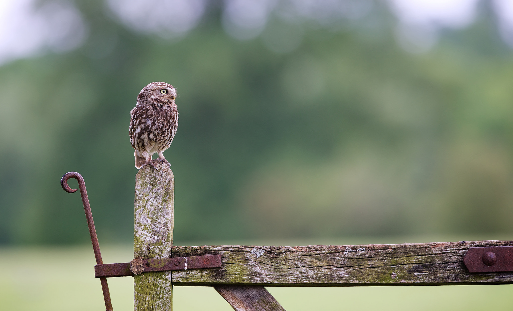 Photograph sitting on the fence by Mark Bridger on 500px