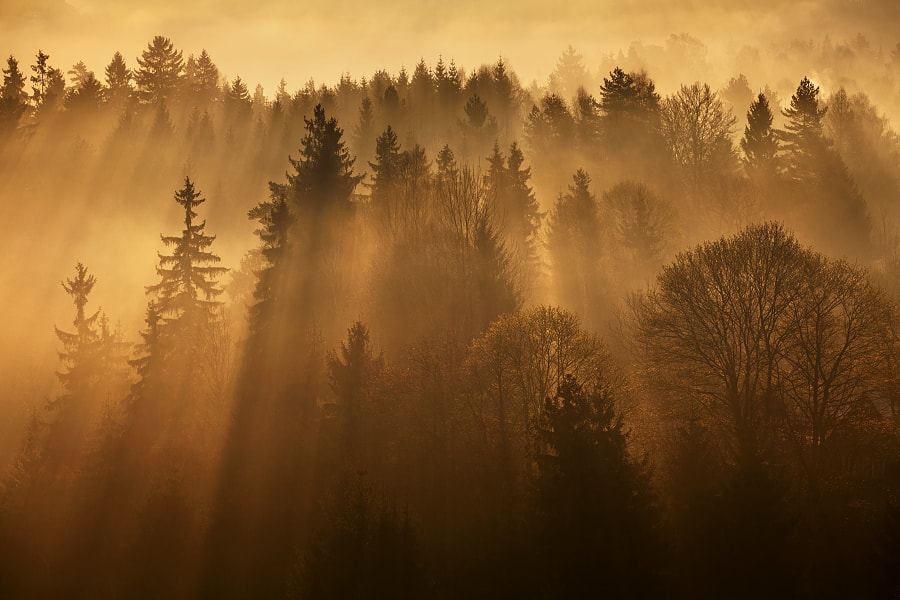 Photograph Sunshine  by Daniel Řeřicha on 500px