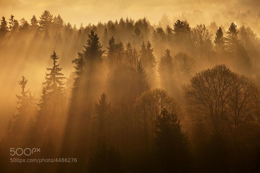 Photograph Sunshine  by Daniel Řeřicha on 500px