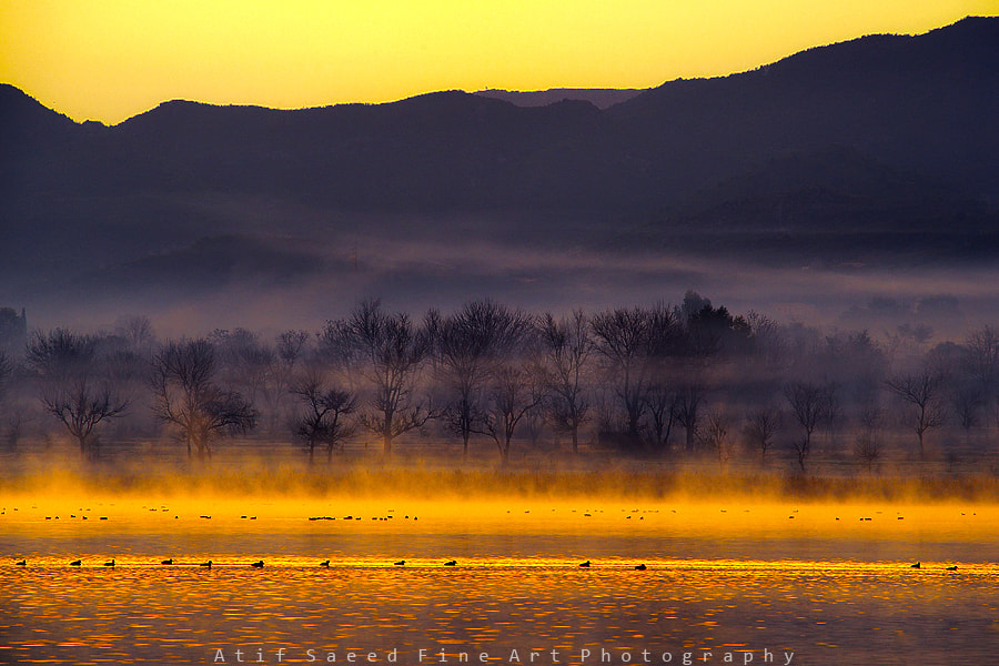 Photograph colour dream! by Atif Saeed on 500px