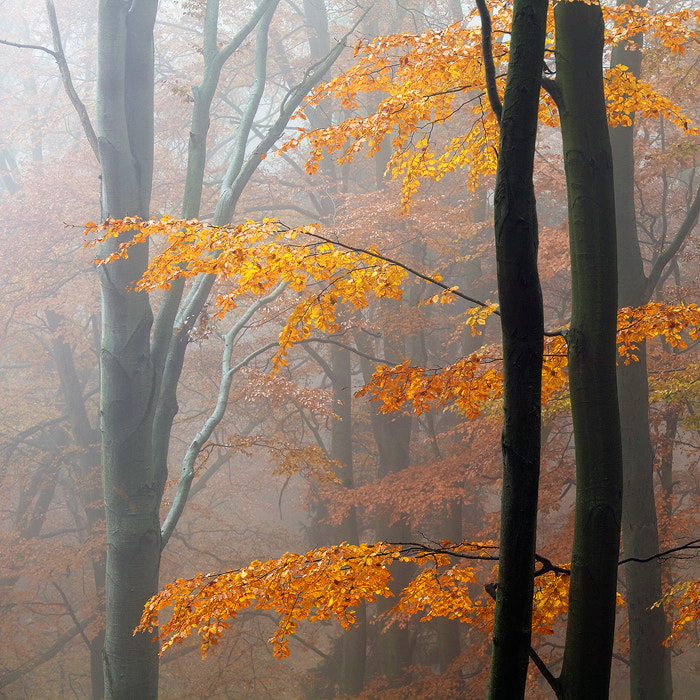 Photograph Autumn Forest by Martin Rak on 500px