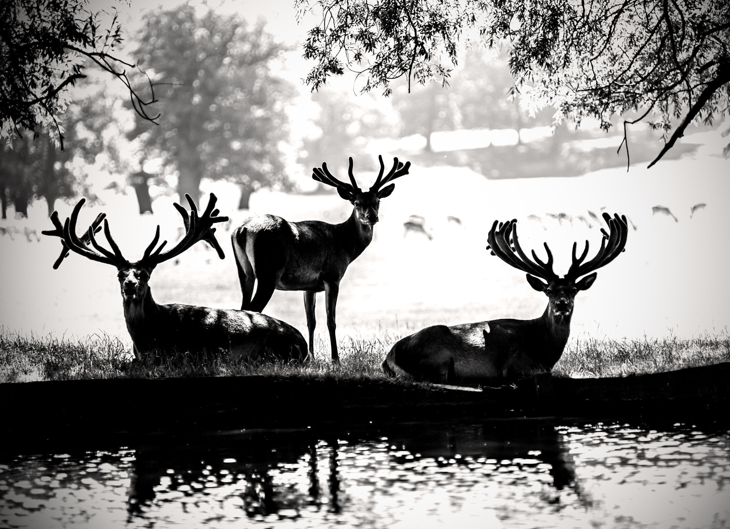 Photograph Stag party by jo williams on 500px