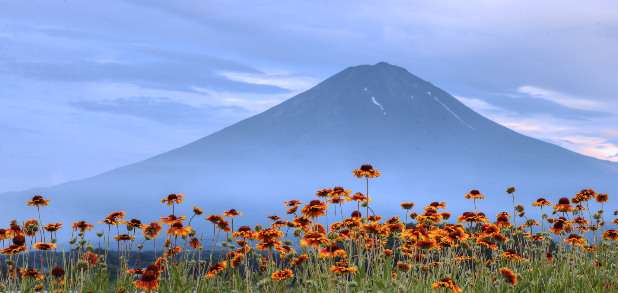 Photograph Flowers & Mt Fuji @ Sunset by hugh dornan on 500px