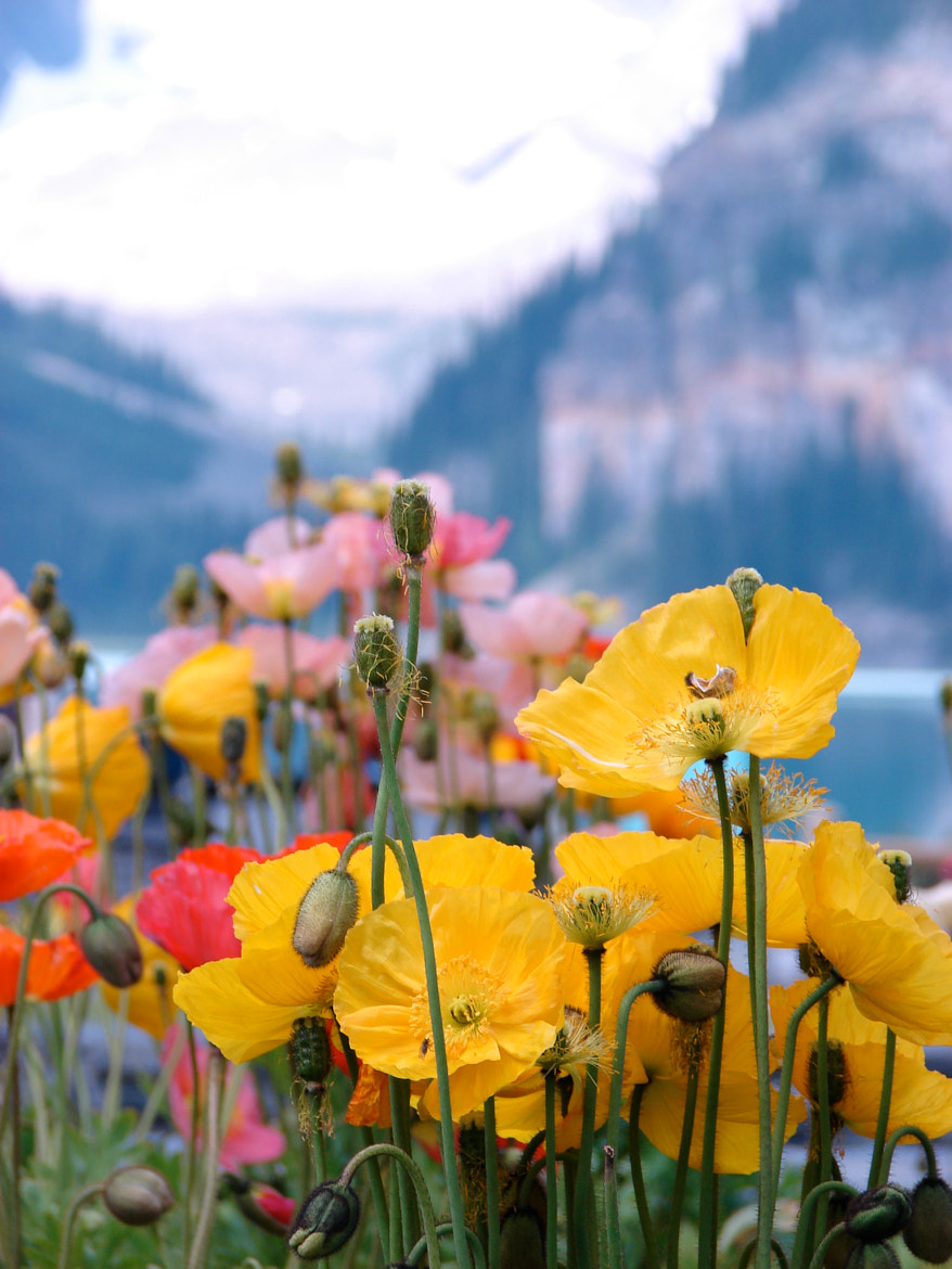 Photograph glacier and poppies by Peter Deiter on 500px