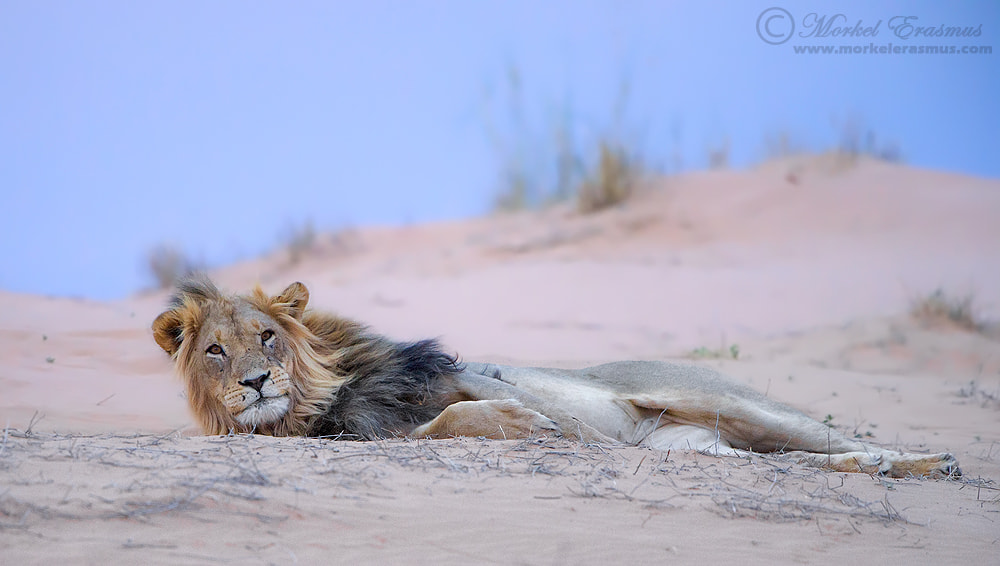 Photograph Whatcha lookin' at? by Morkel Erasmus on 500px