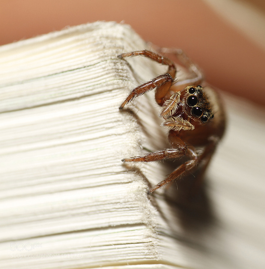 Photograph Jumping Spider by Andrew Teng on 500px