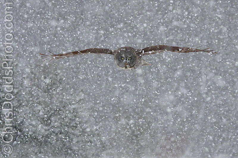 Photograph SNOWFLIGHT by Christopher Dodds on 500px