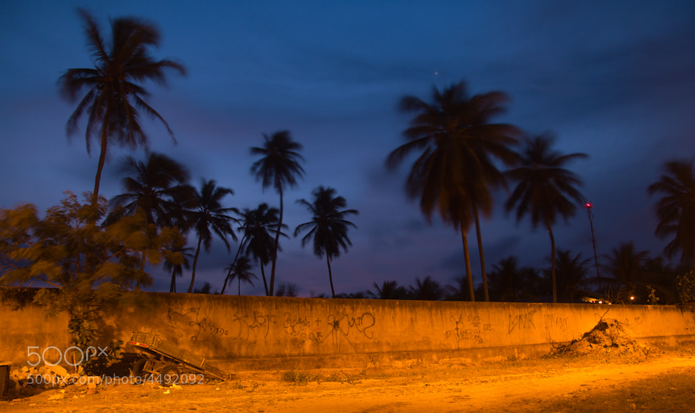 Photograph Palm and Wall by Sam Stratton on 500px