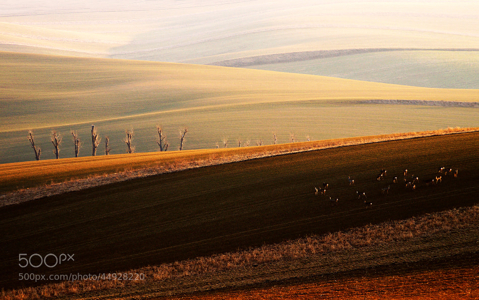 Photograph white little butts )) by Radek Severa on 500px