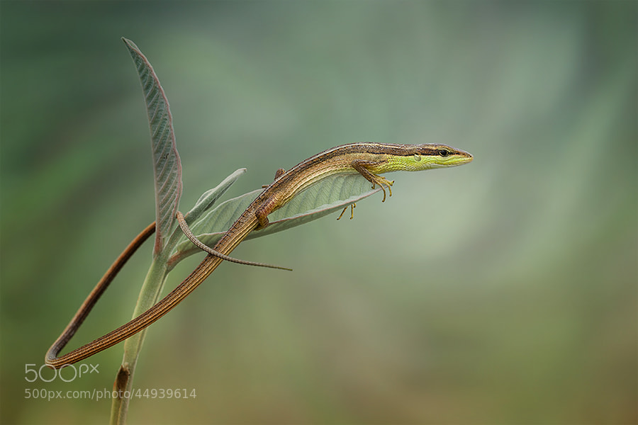 Photograph my pose by  Hendy Mp on 500px