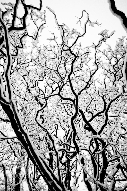 Photograph Winter day by Maciej Wronski on 500px