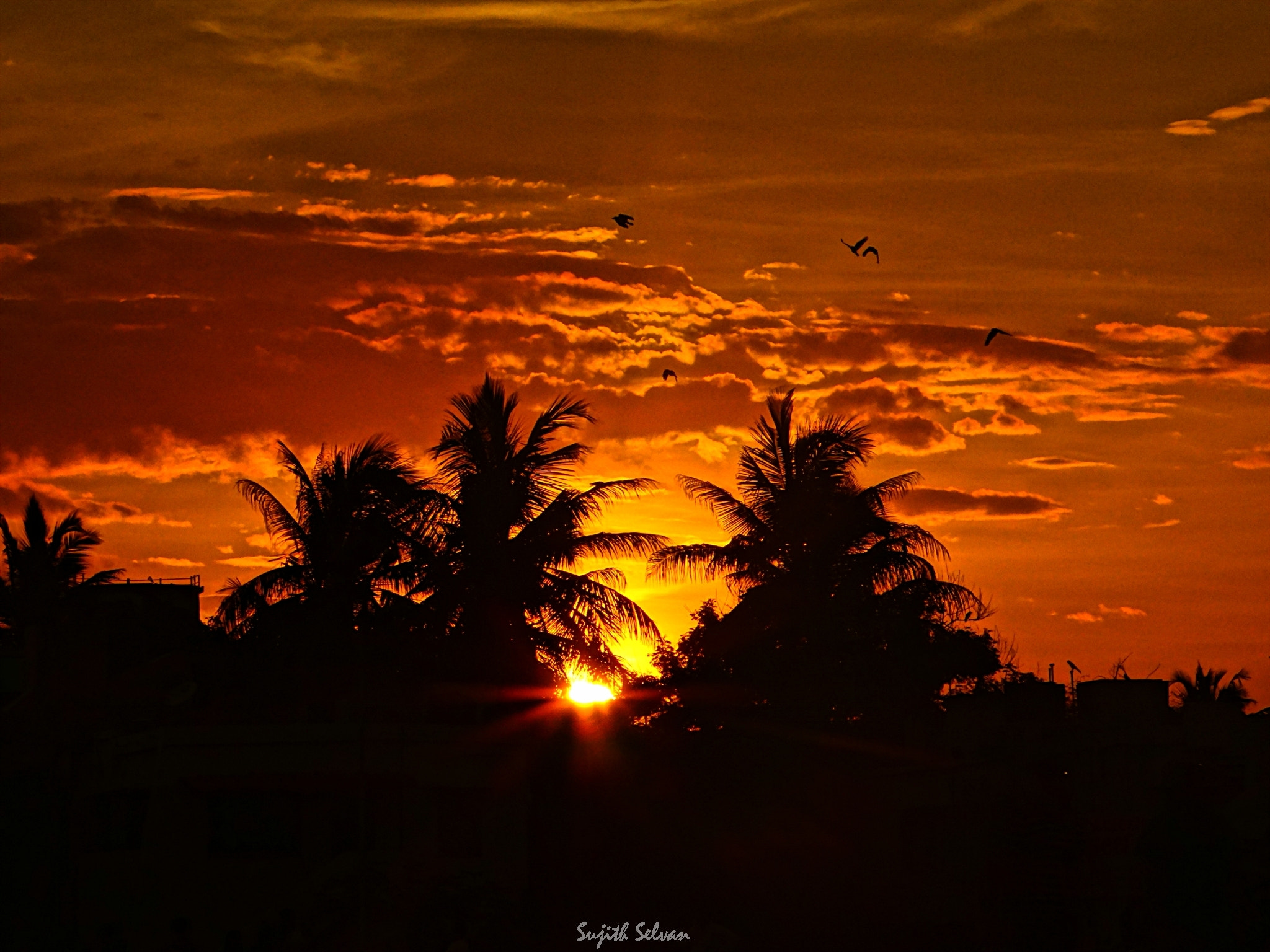 Photograph Sunset red.. by Sujith Selvan on 500px