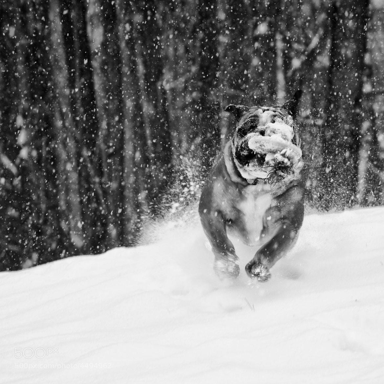 Photograph Fetch! by AP B on 500px